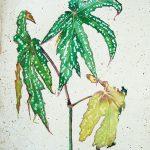 Kwiaty, szkic studyjny, ok. 1923 – 24, gwasz, papier, wł. prywatna, fot. M. Jaroszewski